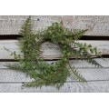 Fern Candle Ring 4.5""